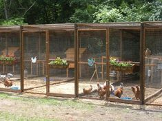 Nice design for accommodating multiple small to medium sized flocks and roos