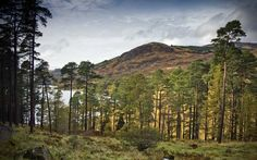 Galloway Forest Park- few towns and cities in Galloway makes this a good spot for stargazing.  Picture: AP