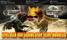 http://asiabetking.org/situs-judi-sabung-ayam-jago-pertama-terpercaya-di-indonesia/  TEMPAT MAIN JUDI SABUNG AYAM ONLINE TERPERCAYA PERTAMA DI INDONESIA DEPOSIT REKENING BANK BCA BRI BNI MANDIRI - Agen Taruhan Bandar Judi Adu Ayam Jago Terbesar Indonesia - Situs Judi Ayam Jago Bekisar Asia Resmi