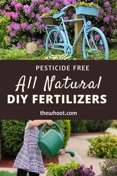 All Natural Fertilizers - Best Homemade Garden Solutions Homemade Plant Fertilizer, Fertilizer For Plants, Vegetable Garden Planner, Garden Solutions, Garden Pests, Garden Fertilizers, Organic Gardening Tips, Garden Care, Plant Care