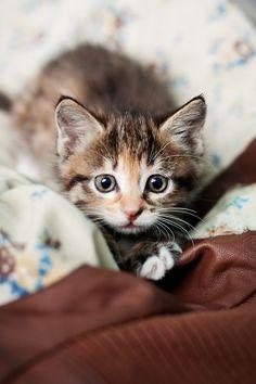 Sweet Kitty (500px,Olga Korzhova)