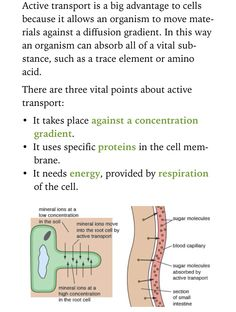 Active transport in root hair cells & the small intestine.