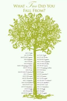 What tree you fell from