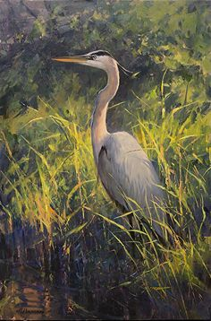 Silence and Stealth- Great Blue Heron by Marc Hanson Oil ~ 24 x 16