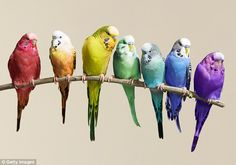 Birds calculate distances by 'optic flow' – the motion of objects, surfaces, and edges in ...