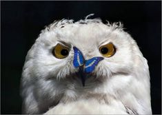 Owl gets no respect. Effing butterfly. Who said you could sit there? (click for more)