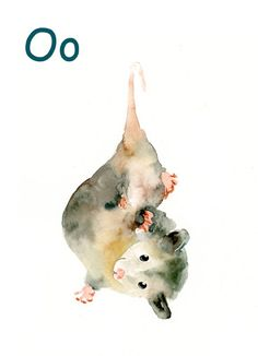 ALPHABET ANIMAL  O for Opossum by DIMDImini 5x7 Print by dimdimini, $8.00