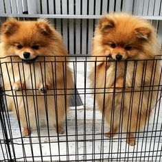 : Looks like we're going to be locked up forever! Winnie : Not if I eat my way out! by poppy_simba_winnie_phoebe : Looks like we're going to be locked up forever! Winnie : Not if I eat my way out! by poppy_simba_winnie_phoebe Cute Baby Animals, Animals And Pets, Funny Animals, Cute Puppies, Cute Dogs, Dogs And Puppies, Doggies, Beautiful Dogs, Animals Beautiful