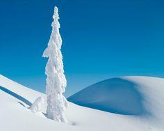 Mt. Seymour Provincial Park, British Columbia, Canada by Adam Gibbs