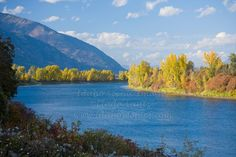 The tree lined Kootenai river near Bonners Ferry Idaho in autumn.