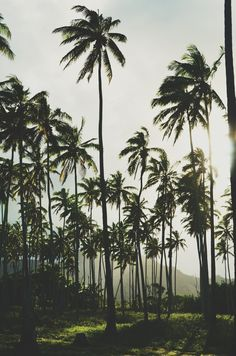 Silhouette trees for tattoo.  Island Child: Photo