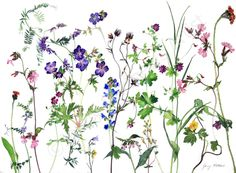 In Conversation with painter Jenny Matthews, 'Where the wild things grow' Botanical Art, Botanical Illustration, Watercolor Flowers, Watercolor Art, Colorfull Wallpaper, Kids Graphics, Flower Tattoo Designs, Vintage Flowers, Nursery Art