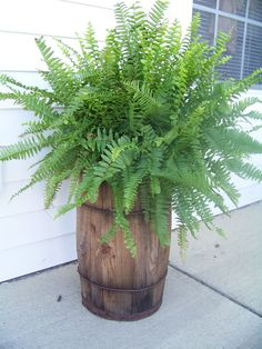 Love the olde wooden barrel ~ perfect for a fern on a front porch