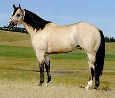 AQHA barrel racing stallion, A Smooth Guy. photo: Larry Larson.