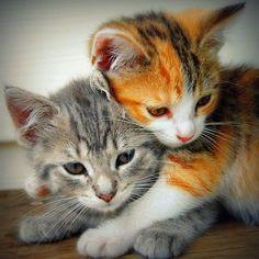 Cuddle Cats. #Gato #Neko