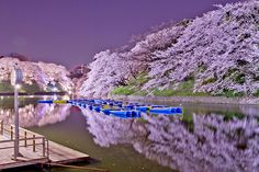 20 Of The Best Pictures Of This Year's Japanese Cherry Blossoms - Image credits: onotch