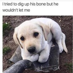 Dogs and puppies, doggies, dog memes, funny animal memes, funny dog Funny Dog Memes, Funny Animal Memes, Cute Funny Animals, Funny Animal Pictures, Cute Baby Animals, Funny Cute, Funny Dogs, Meme Meme, Funniest Memes