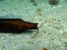The Octopus and the Beer Bottle