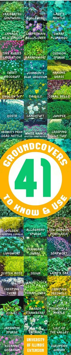 41 Groundcovers to Know & Use: Groundcover plants, when properly taken care of, provide dense soil cover, retard weed growth, and prevent soil erosion. Groundcovers range in height from an inch to four feet. They can be woody or herbaceous; clumping or ru Outdoor Projects, Garden Projects, Shade Garden, Garden Plants, Landscape Design, Garden Design, Ground Cover Plants, My Secret Garden, Plantation