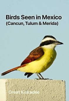 Did you see a bird in Mexico? Here are photos of some common Yucatan birds seen in Cancun Mexico plus birds in Merida, Progresso & Tulum Mexico. Cancun Mexico, Cozumel, Cave Diving, Scuba Diving, Maui Vacation, Visit Mexico, Big Island Hawaii, Grand Cayman, Great Barrier Reef