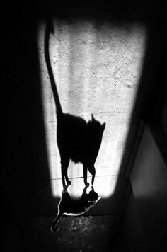 """Cat And Her Shadow"" by Alexei Bednij #cat #art #photography"