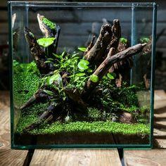 825 Likes, 9 Comments Water Terrarium, Aquarium Terrarium, Reptile Terrarium, Moss Terrarium, Terrarium Plants, Planted Aquarium, Aquarium Fish, Aquascaping, Vivarium