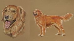 How to Draw Dogs in Colored Pencil
