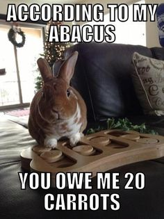 According to my abacus, you owe me 20 carrots Secret Life Of Rabbits, Secret Life Of Pets, Bunny Art, Cute Bunny, Beautiful Rabbit, Bunny Cages, House Rabbit, Funny Animals, Baby Animals
