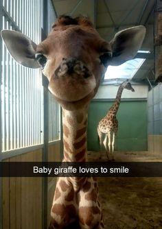 Sweet little giraffe!
