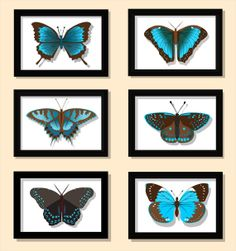 Turquoise and Brown Butterfly Collection by ImagineThatOriginals, $40.00