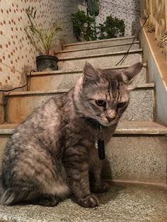 Simba on the stairs
