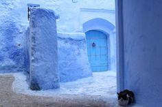 朝、旧市街を歩くと猫をぽこぽこ見かける