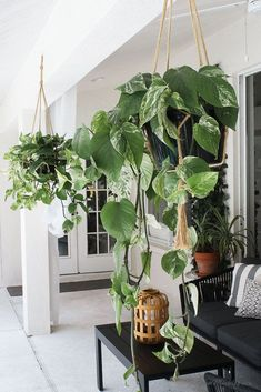 Patio, pool and lanai decor ideas on a budget-hanging plants bring the space to life
