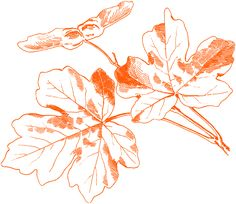 Free Vintage Autumn Images - Maple Leaves - The Graphics Fairy