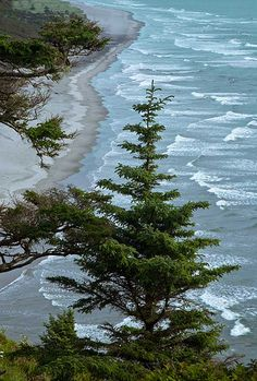North Head Bluffs, Cape Disappointment State Park, Washington State