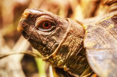 Turtle (Macro)