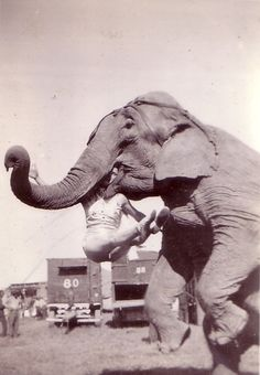 Someone give him some peanuts now! Hagenbeck-Wallace Circus elephant 1937