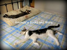 Picture Perfect Party Linky ~ Amandas Books and More Our daughters' kittens are so cute when they sleep. They also look funny in the different ways that they nap. There's also a linky where you can add your Wordless Wednesday. Check out the photos at http://abooksandmore.blogspot.com/2013/04/picture-perfect-party-linky-36.html