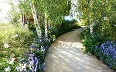 Garden With Decomposed Granite And Birch Trees : Enchanting Beauty Birch Trees In Your Garden