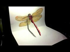 Drawing a 3d dragonfly - How to draw a dragonfly - YouTube