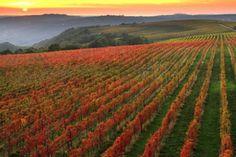Primorska is well-known Slovenian wine region. In Primorska you can find four wine districts: Goriška Brda, Vipava Valley, Karst and Slovenian Istra
