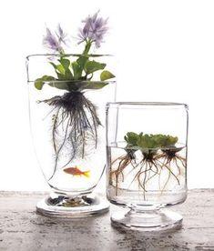 Apportez une touche de nature et de fraîcheur à votre décoration avec un plante aquatique. En bocal ou aquarium, elle apportera une bouffée d'oxygène.