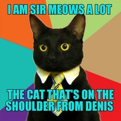 Sir meows a lot in real life
