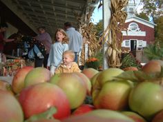 Apple picking: the best farms and orchards for families near NYC