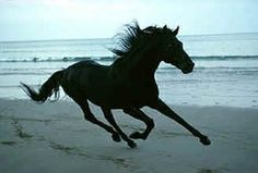 Black Horse Running On the Beach | Black Horse