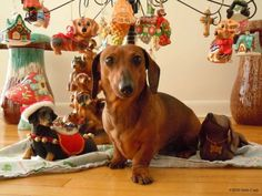 Christmas Dachshund by joni