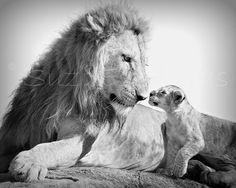 SAFARI BABY ANIMALS, Set of 4 Black and White Photos, 8 X 10, Elephant, Lion, Cheetah, Giraffe, Animal Photography, Baby Shower Gift. $40.00, via Etsy.