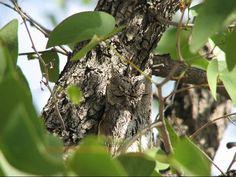 camuflagem-coruja-5