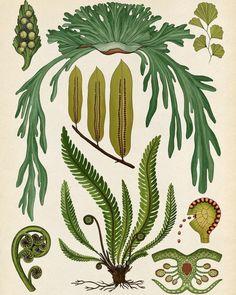 Ferns from Botanicum. Publishing in one…... #Arsetculture #Katie_Scott #Tumblr_Curators