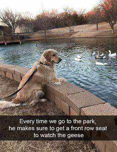 35 Funny Animal Memes